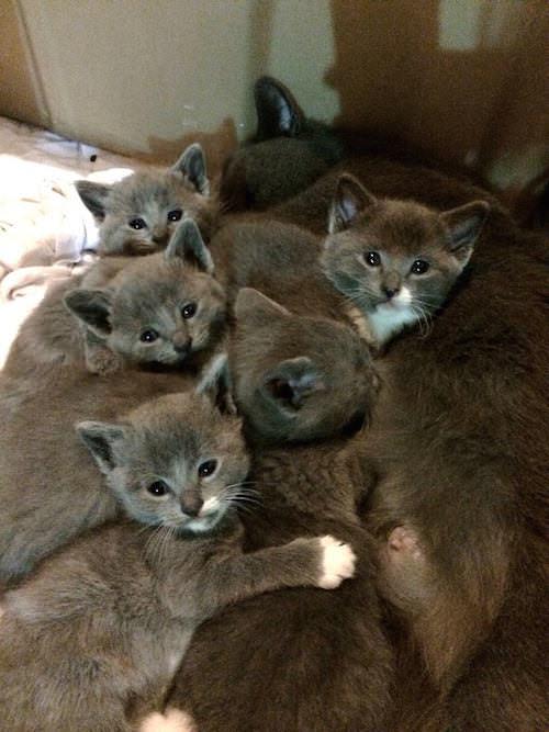 猫団子になる子猫達