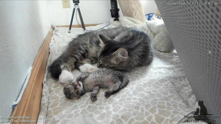 幸せな子猫と母猫