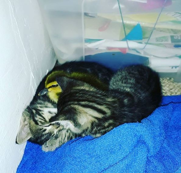 子猫とヒナ