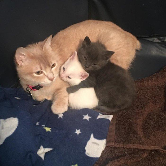 幸せな猫達