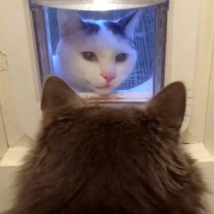 家の中を覗く猫