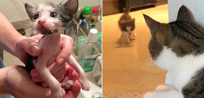 嵐の中をひとりで生き抜き、安全な家に保護された子猫。先住猫との暮らしに愛を見つけ、そのまま家族の一員に (9枚)
