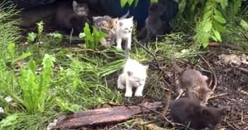 10匹の子猫