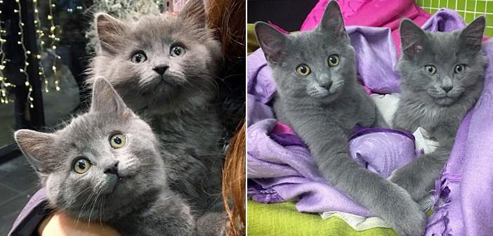 凍えるような寒さの中、小屋の屋根から救い出された2匹の子猫。暖かい家の中で、片時も離れることなく寄り添い続ける
