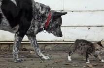 子猫を見守る犬