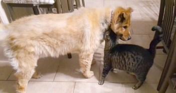 犬と猫の再会