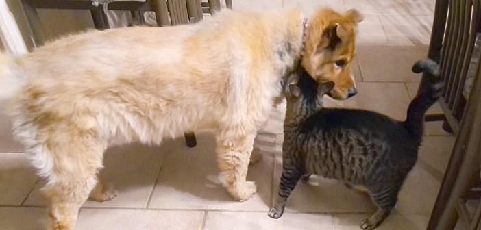 大好きな盲目の犬と1ヶ月間も会えなかった猫。再会の瞬間に心がホッと温まる (*´ω`*)