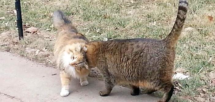 大学の構内で暮らす70匹の野良猫。教職員や学生達に世話されて、毎日が幸せいっぱい!