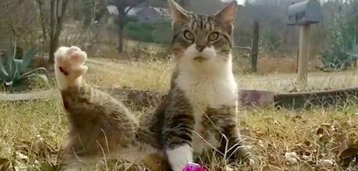 身体がグラグラと揺れるため、保護施設に引き渡された猫。愛情深い夫婦との出会いで、大きく運命が変わる!