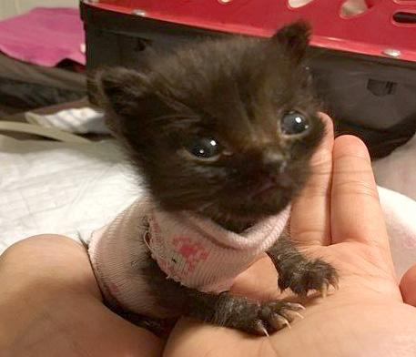子猫と洋服