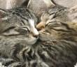 仲良しな猫の兄弟
