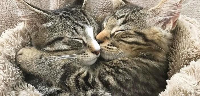 保護施設に子猫を迎えに行った夫婦。でも兄弟と一緒の姿があまりにも可愛くて、いつの間にか2匹を連れて帰宅 (*´ェ`*)