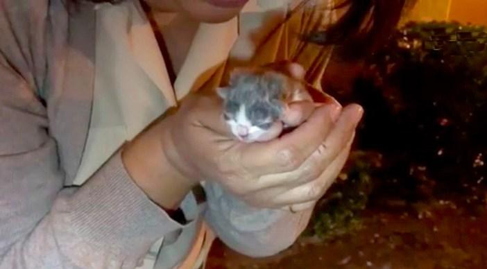 抱えられた子猫