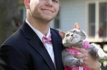 プロムの青年と猫