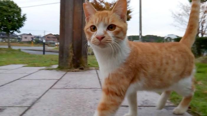 顔を見ると駆け寄って来る猫