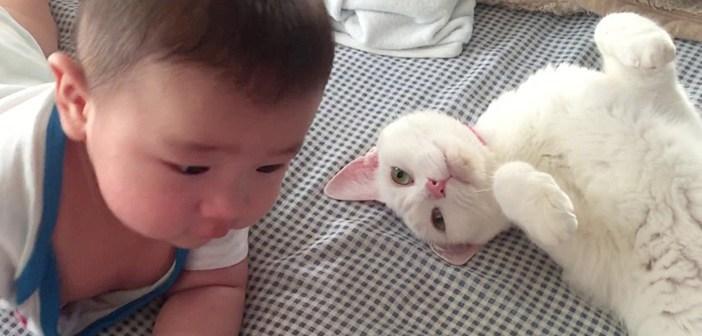 赤ちゃんと猫
