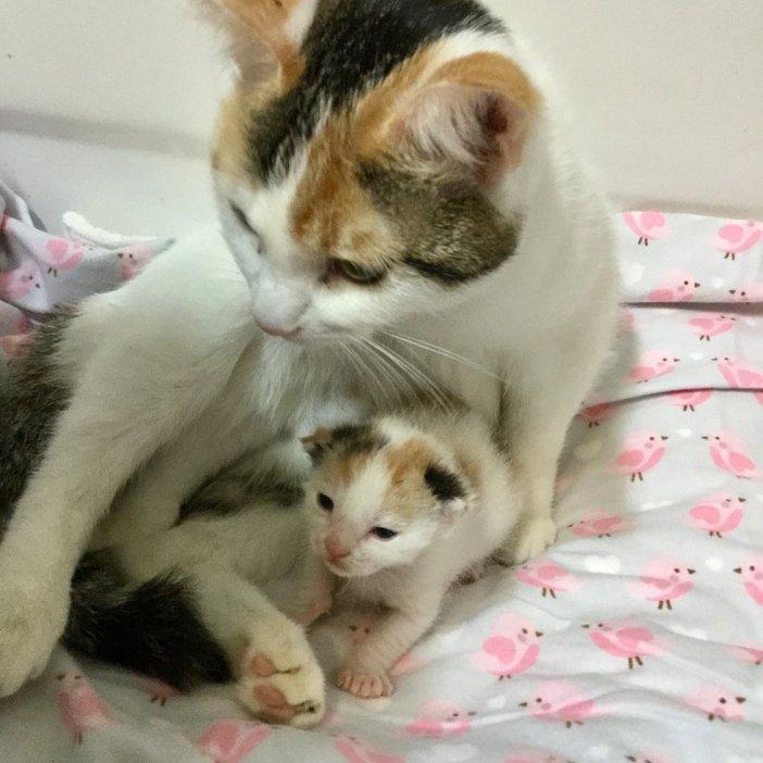 幸せな母猫と子猫