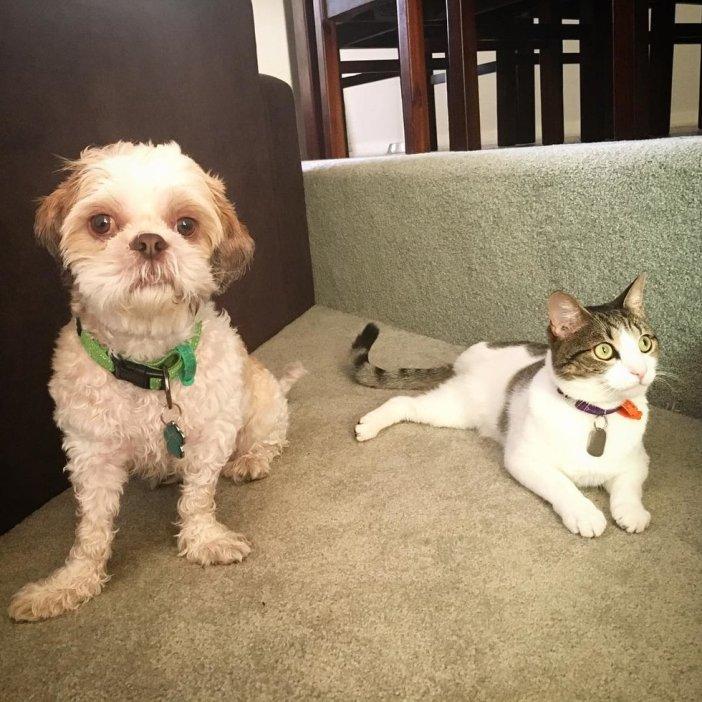 くつろぐ犬と猫