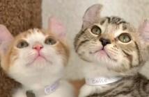 幸福を呼ぶ猫の親子