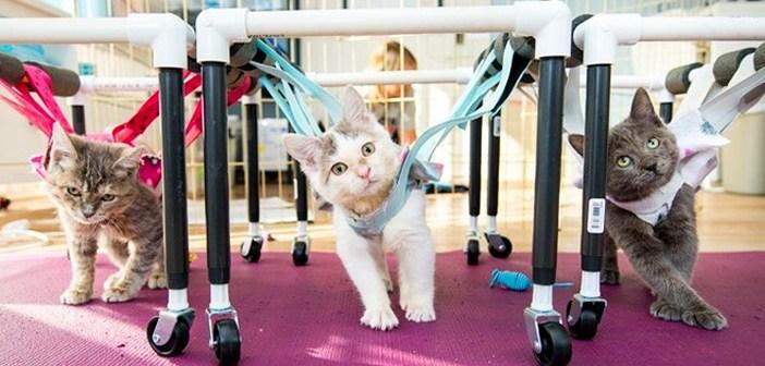 歩行器子猫