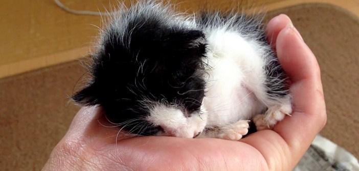 川に落ちて鳴いていた子猫を保護。暖かい家の中で見せた、幸せそうな姿に心がホッとする (*´ェ`*)