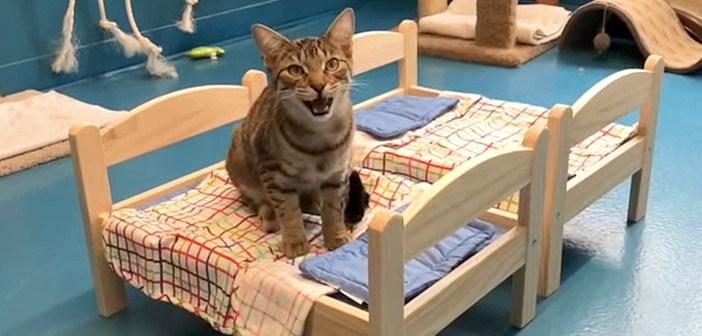 ikeaのベッドと猫