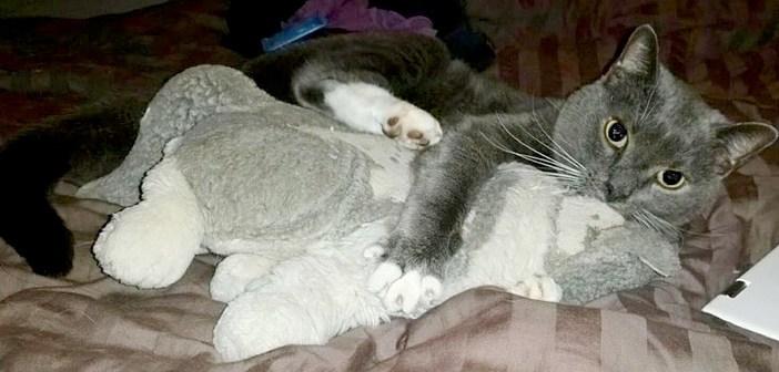 飼い主さんを失った後、ぬいぐるみを離さなくなった猫。常に一緒に行動し、しっかりと抱きしめ続ける