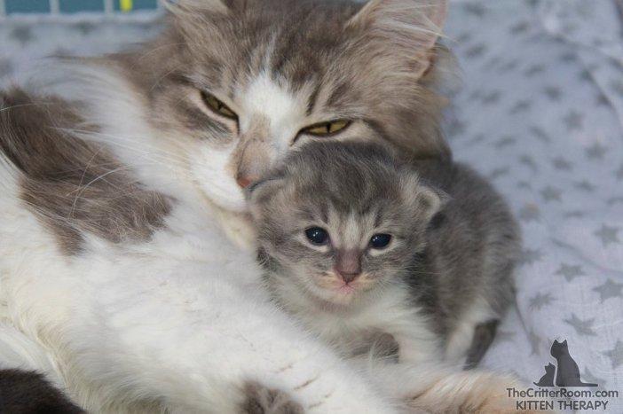幸せそうな猫の親子