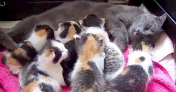 8匹の子猫と母猫