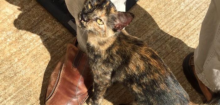 職場の前で出会った子猫が猛アプローチしてきた! 勢いに押されて家に連れて帰ると、毎日が幸せいっぱいに (*´ω`*)♪