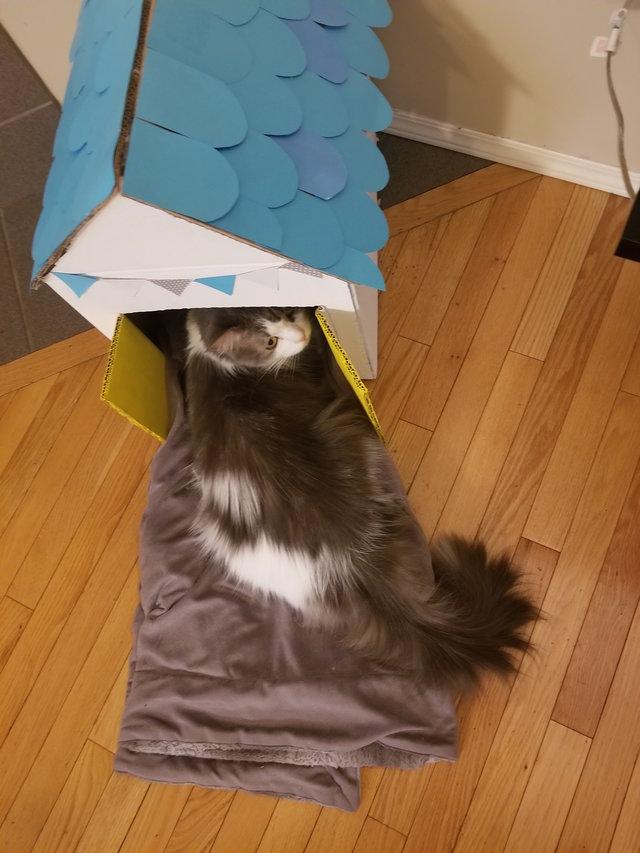 家を手に入れた猫