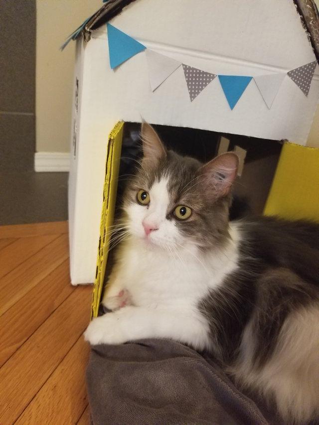 自分の家と猫