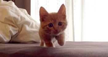 ゆっくり子猫