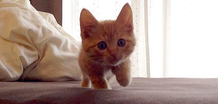 飼い主さんに呼ばれた子猫ちゃん。元気に駆け寄って来るかと思いきや、驚くほどゆ〜っくりと近づいて来た ( *´艸`)♡