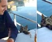 男性の食後にこっそりと魚を盗もうとした猫。その瞬間、お互いの視線がバチッと合って、ふたりはそのまま家族になる!