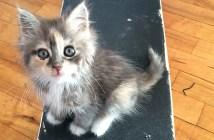 スケートボードと子猫