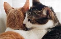 親友になった猫