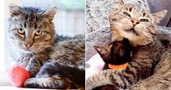 幸せな猫のおじいちゃん