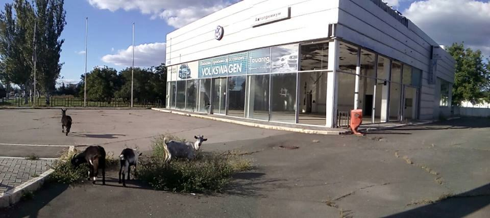 Only goats are grazing weeds at the robbed and abandoned Volkswagen dealership in Russian-occupied Luhansk, Ukraine. September 2016 (Image: Denys Kazansky, deniskazansky.com.ua)