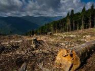Mountain deforestation can lead to floods during intense rainfall. Photo: ukr.media