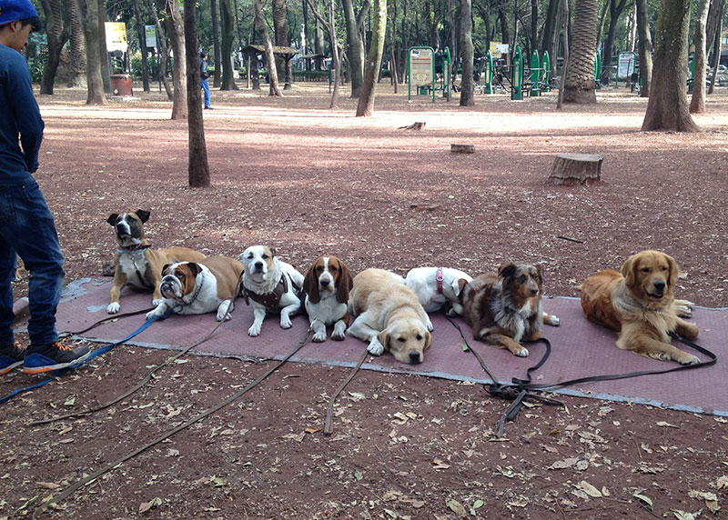 cidade-dos-cachorros-cidade-do-mexico-eusouatoa