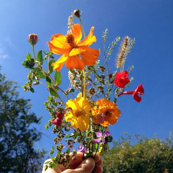 flores-do-campo-SAA-eusouatoa