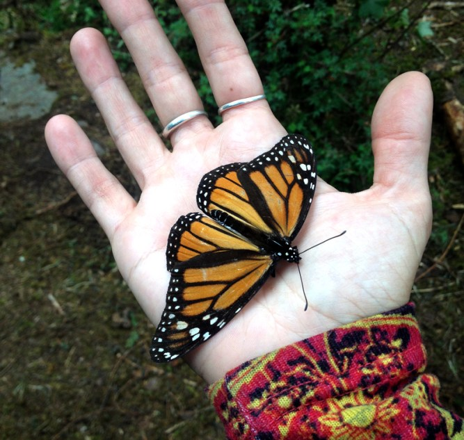 santuario-mariposa-monarca-borboleta-eusouatoa