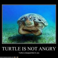 Disappointed Turtle
