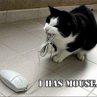 I has mouse
