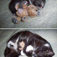 Cat's lasting love