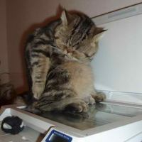 Prankster office cat