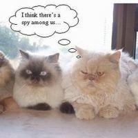 One suspicious cat