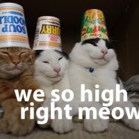 High Cats
