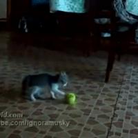 Tennis ball horror movie